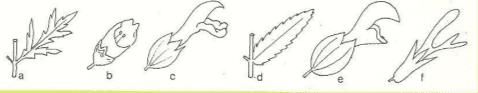 Immagine Scrophulariaceae - 4